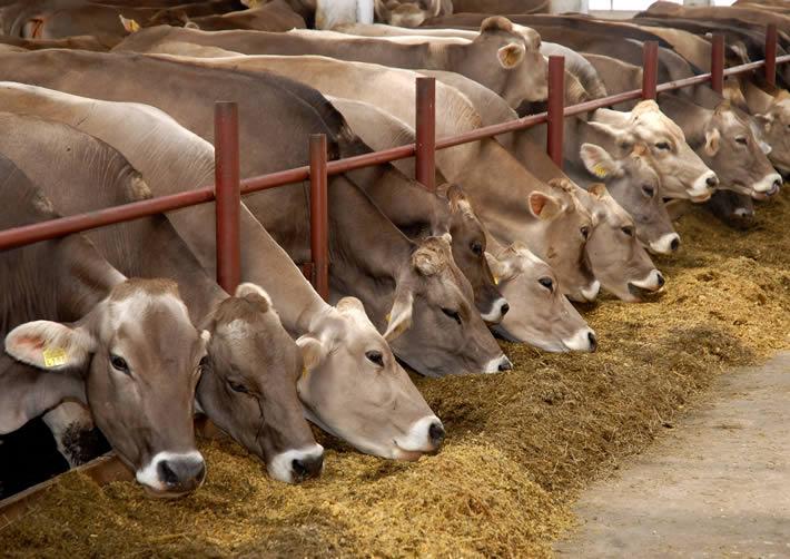 В рамках xv российской агропромышленной выставки золотая осень в москве представители администрации томской области подписали протокол о сотрудничестве с фондом нидерландско-российское животноводство