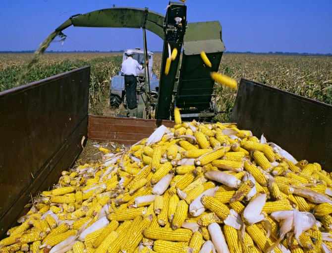 Выращивание кукурузы в ссср 23