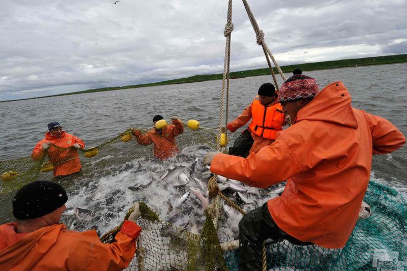 петропавловск-камчатский ловля рыбы